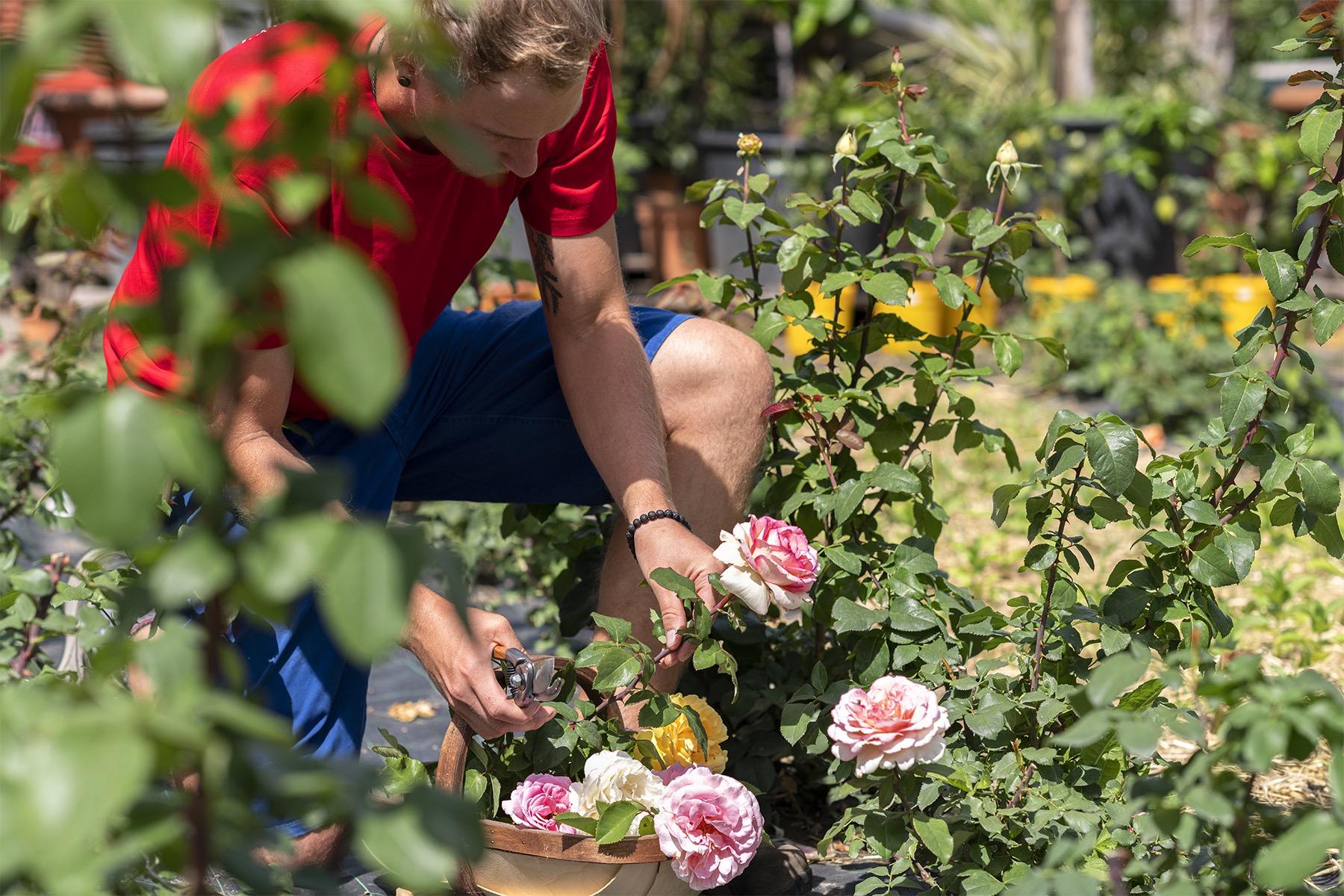 Schnittblumen vom eigenen Feld - Ihren Blumenstrauß säen wir eigenhändig aus